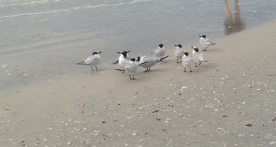 beachbirds