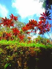 Hawaii Rainforest