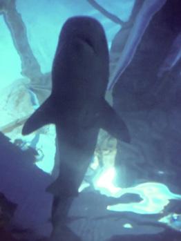 Shark Above!