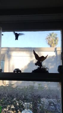 Bird Scattered